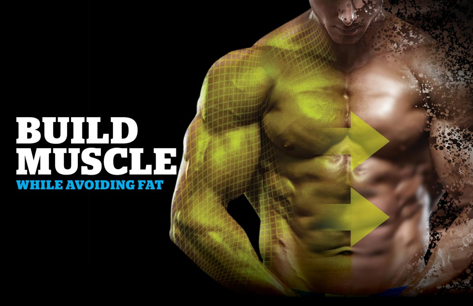 How to Effectively Increase Muscle While Minimizing Fat Gain